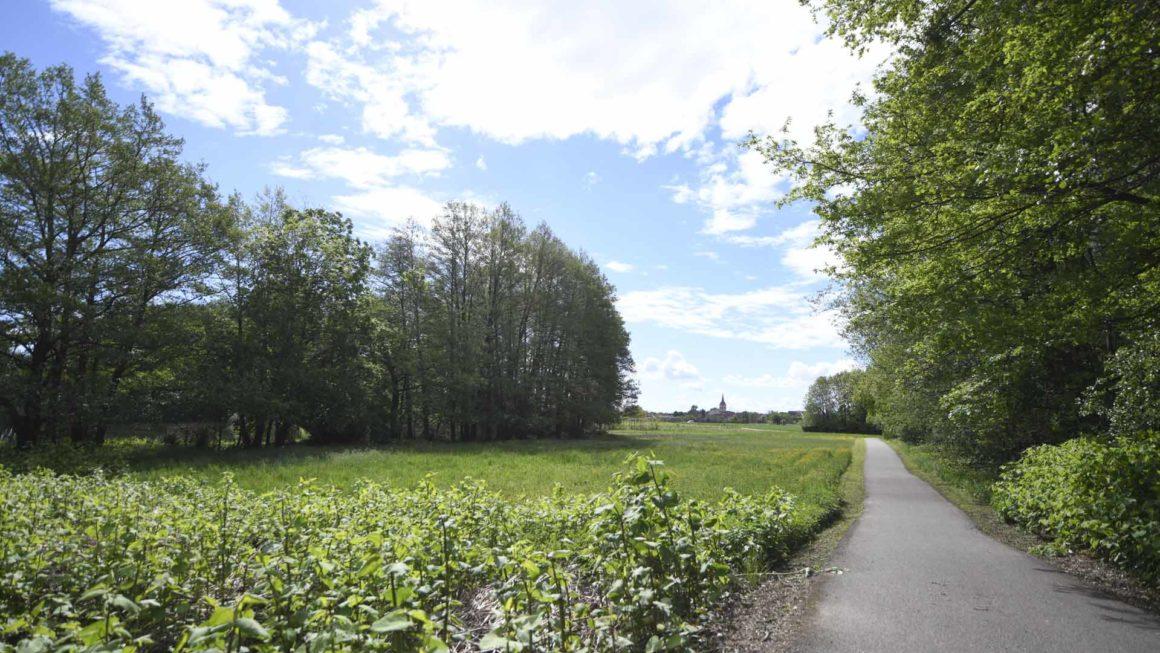 chemin foret Pulversheim